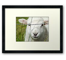 Peeking Through The Fence Framed Print