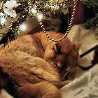 Dreaming of Santa by Jamie Lee