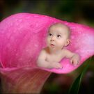 Pink Lily by Kym Howard
