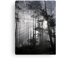 Light Must Have It's Way Canvas Print