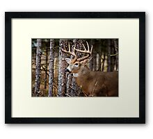 White-Tailed Buck Framed Print