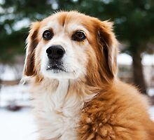 Lexi in the Snow by Tyler Stierhoff