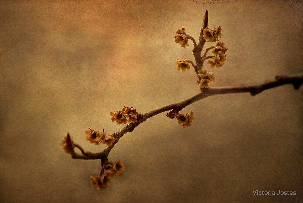 January Blossoms by Victoria Jostes