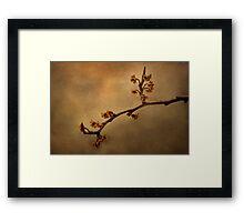 January Blossoms Framed Print