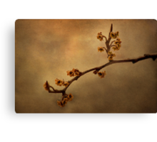 January Blossoms Canvas Print