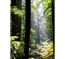 Dramatic Forest Photographic Print