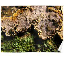 Lichen, Algae and Fungi Landscape Poster
