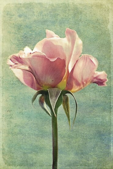 Vintage Rose by Laura Palazzolo