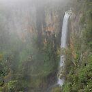 ~ Purlingbrook Falls - Queensland ~ by Bree Lucas