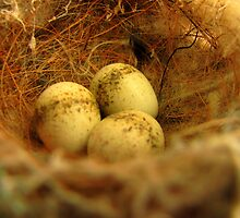 Willys eggs by bobby1