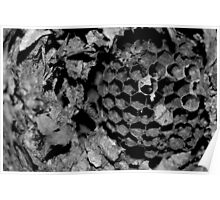 Wasp nest Poster