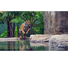 Tiger In Action Photographic Print