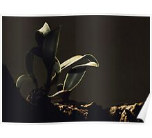 Orchid in Tree Poster