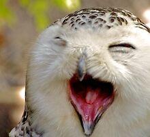 Yawning Snowy Owl by Jessica Dzupina