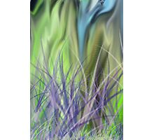 Grassy Knoll Photographic Print