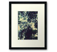 Trees under the sky Framed Print