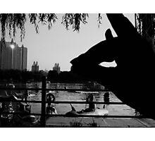 Shadow Fox - Beijing 2006 Photographic Print