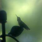 Hummingbird 1 by Rick Baber