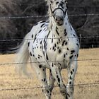 A Spotted Horse by Terence Russell