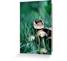Fairy's World 1 Greeting Card