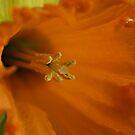 Daffodil of yellow & orange by Bev Pascoe