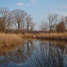 Rockhold Creek by Valarie Napawanetz