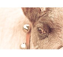 reindeer thoughts Photographic Print