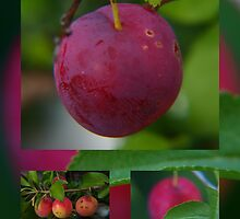 the sweetness of something home grown... by byzantinehalo