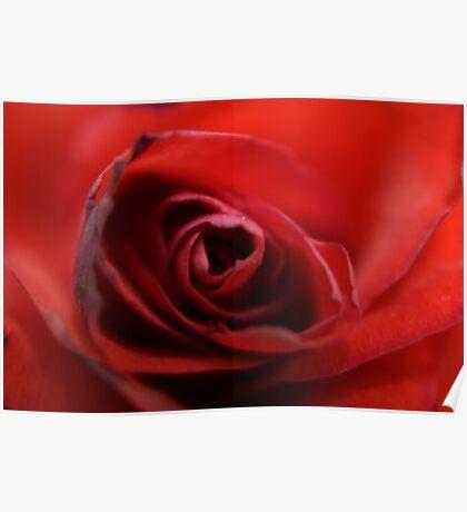 Dreamy Macro Rose Poster