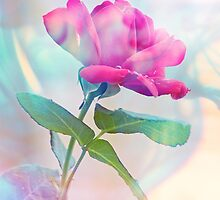 Ghostly Rose by ©Maria Medeiros
