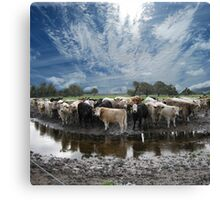 Steers and Clouds Canvas Print