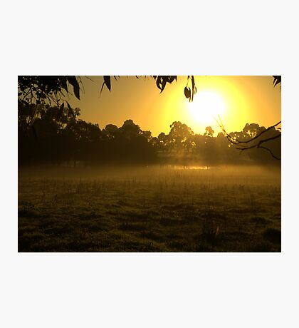 Morning on the farm Photographic Print