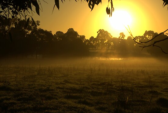 Morning on the farm by Kerry  Hill