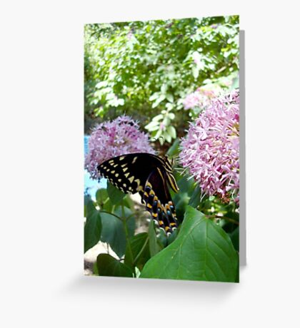 Giant Swallowtail Butterfly in profile Greeting Card