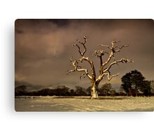 A Tree Is For Life, Not Just For Christmas. Canvas Print
