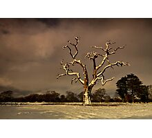 A Tree Is For Life, Not Just For Christmas. Photographic Print