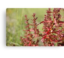 berry red berry  Canvas Print