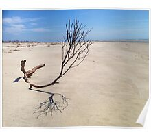 Small Tree on Deserted Beach Poster