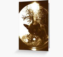 feline lens Greeting Card