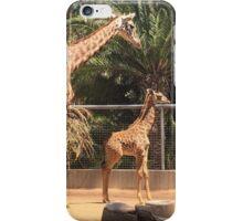 Giraffe Family, San Diego Zoo iPhone Case/Skin