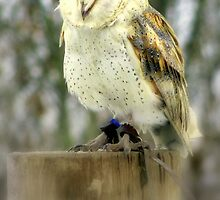 Barn Owl  by Kate Towers IPA