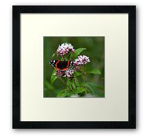 """""""The red admiral"""" Framed Print"""