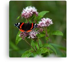 """The red admiral"" Canvas Print"