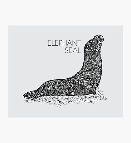 Elephant Seal Sketch Photographic Print