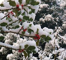 Holly in the Snow by MichelleRees