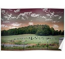 Cows of New Hope Poster