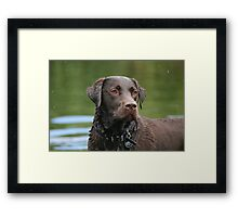 Proud - Choc Lab Framed Print