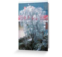 Tree Freezing In The Fog... Greeting Card