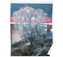 Tree Freezing In The Fog... Poster