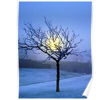 Tree in snow  Poster
